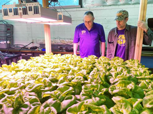 WIU faculty members Shelby Henning and Dan Atherton are growing lettuce hydroponically in Knoblauch Hall, which has been enhanced by a recently-awarded grant.